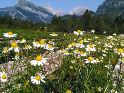Intervista dell'UTI delle Valli e delle Dolomiti friulane al Presidente Alberto Grizzo
