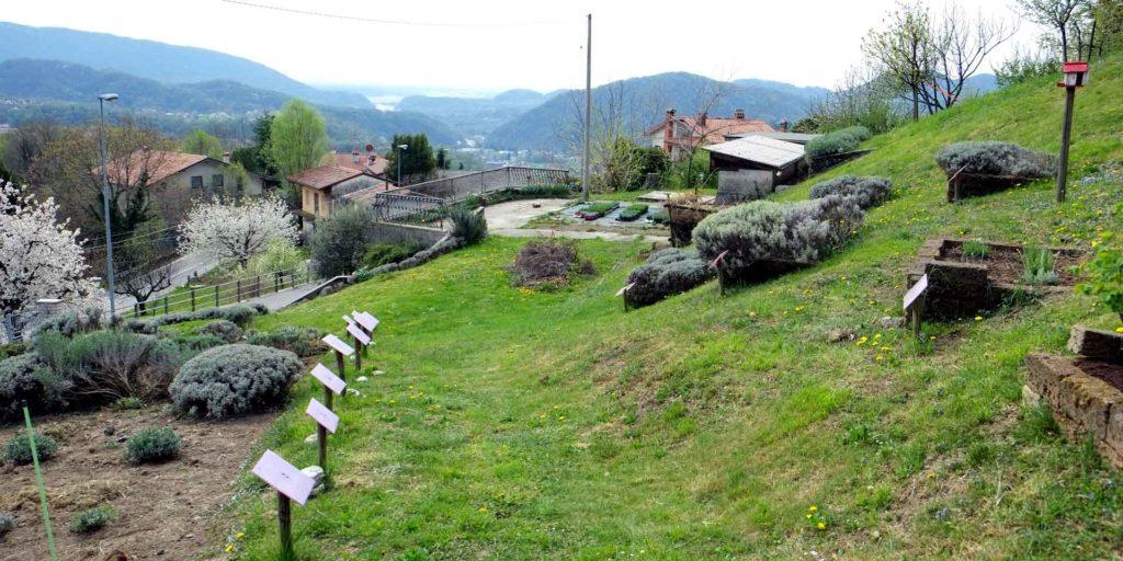 Lavanda e Oli essenziali di Mevania Marchi parte del Consorzio delle Valli e delle Dolomiti friulane