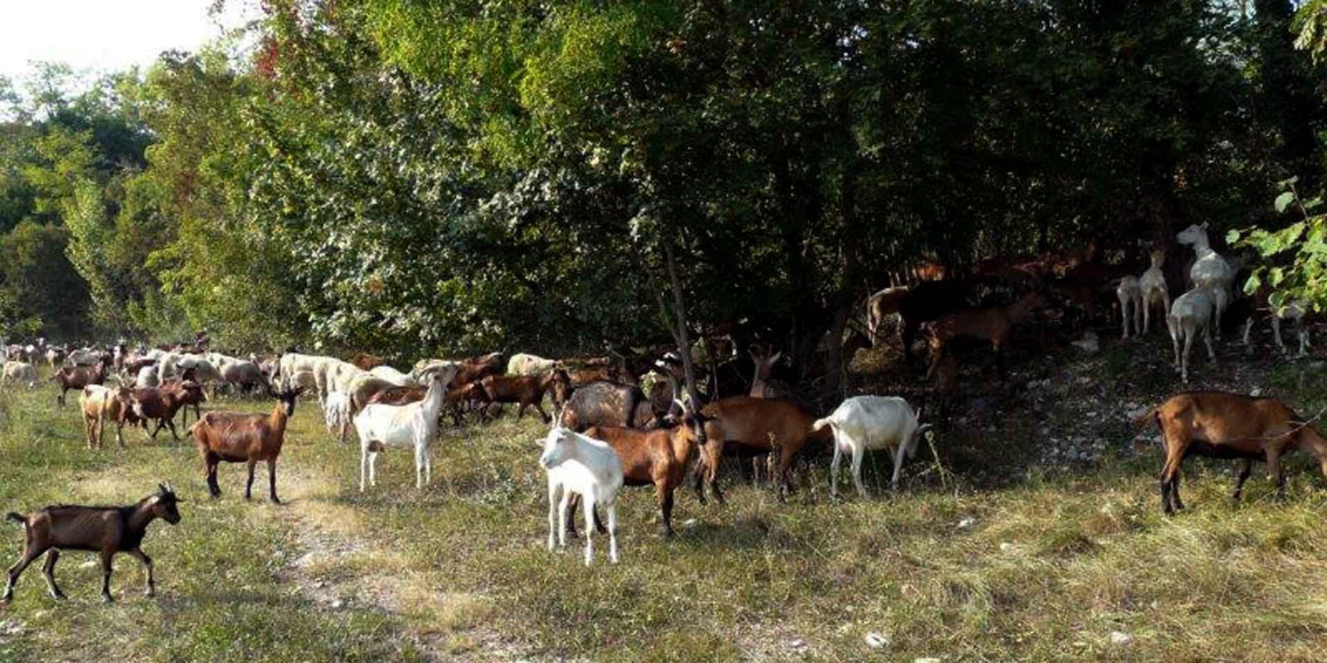 Azienda agricola Palcoda parte del Consorzio delle Valli e delle Dolomiti friulane