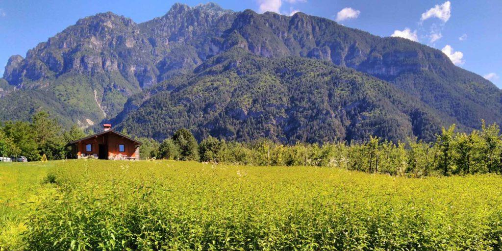 Società Agricola Salietparte del consorzio valli dolomiti friulane