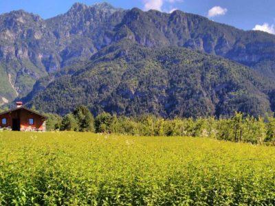 Saliet: società agricola nel cuore del Parco delle Dolomiti friulane