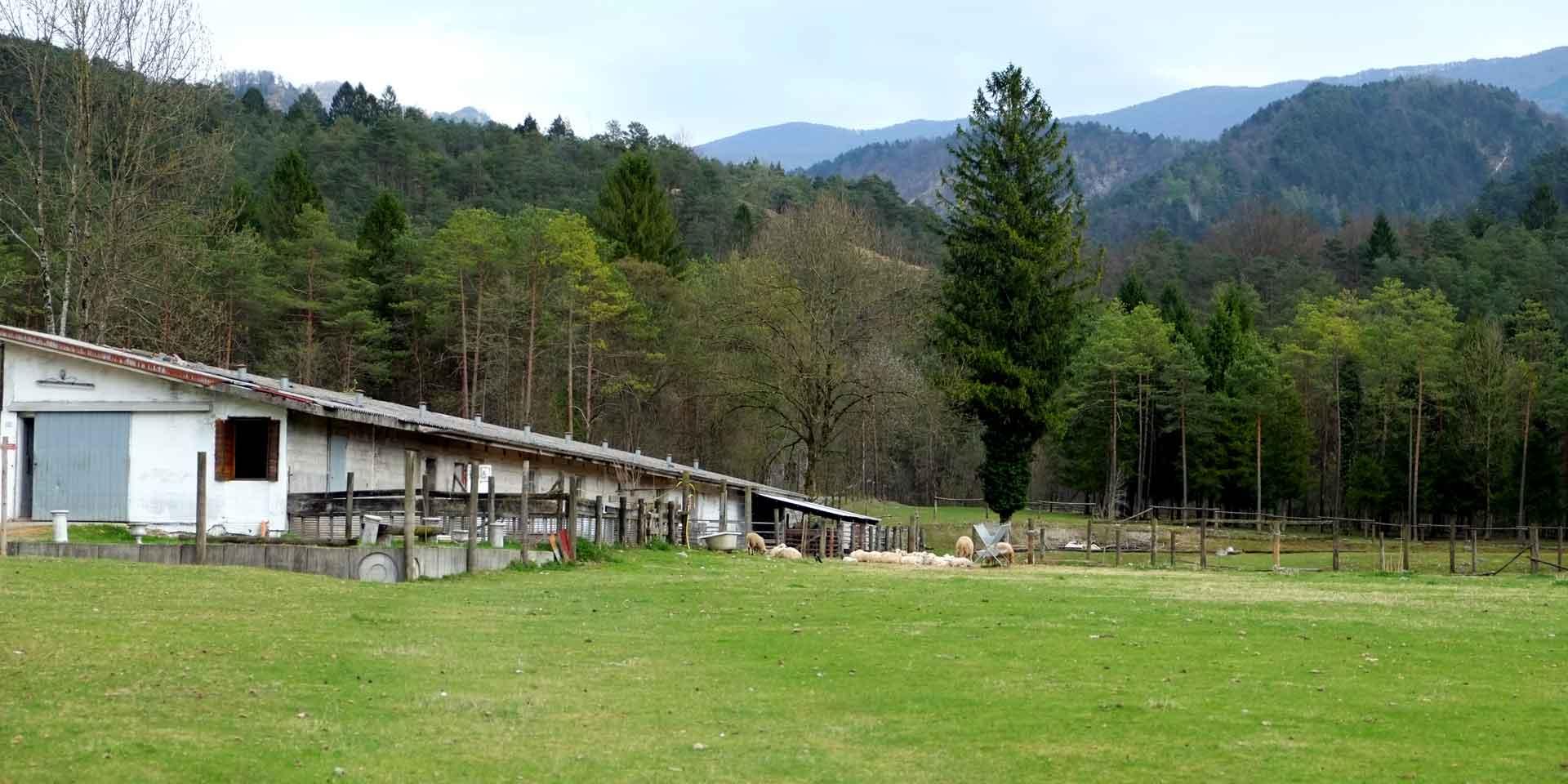 Fattoria di Sottosopra parte del Consorzio Valli e Dolomiti friulane