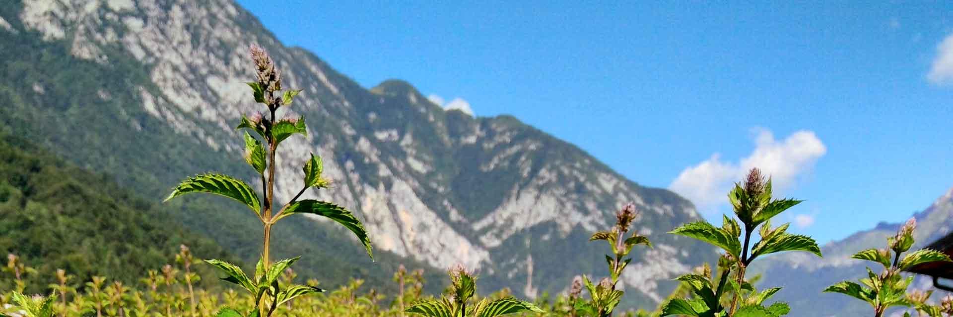 Consorzio delle Valli e delle Dolomiti Friulane
