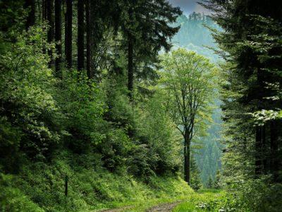 Flora alpi coop Consorzio valli dolomiti friulane